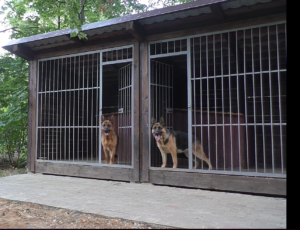 "Команда ""Место"" с двумя собаками"""