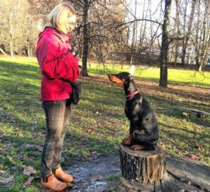 Дрессировка щенка добермана