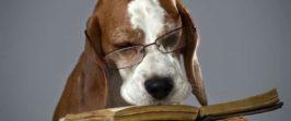Какие книги по дрессировке собак стоит почитать?