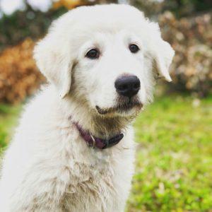 Живите с собакой в одном времени фото