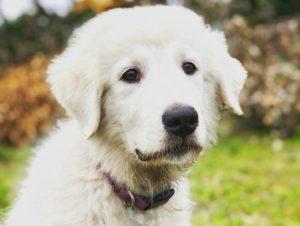 воспитание спасенной собаки