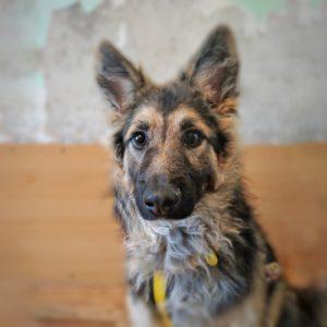 картинка собака из приюта