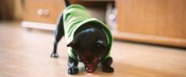 Лазерная указка для собак.