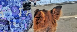 Ритуалы в дрессировке собак.