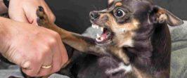 Агрессия собаки. Как правильно понять и избежать.