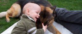 Собака укусила ребёнка.